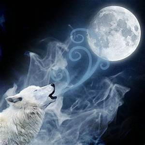 Wolf howling at the moon | Wolves. | Pinterest