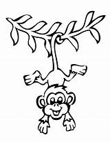 Monkey Outline Clipart Hanging Template Clipartion sketch template
