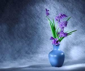Flower Blue Violet Flowers Vase Flower Garden Wallpapers ...