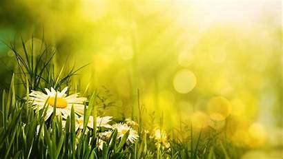 Flower Morning Relaxing Positive Daisies Energy Uplifting