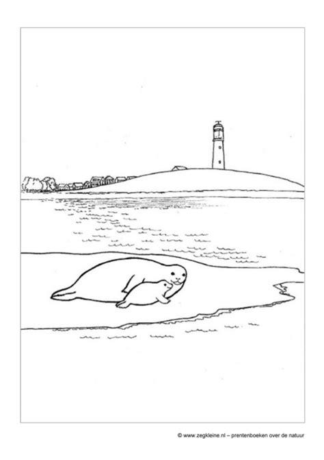 Kleurplaten Zeehonden by Zeg Kleine Zeehond Prentenboek Voor Peuters En Kleuters