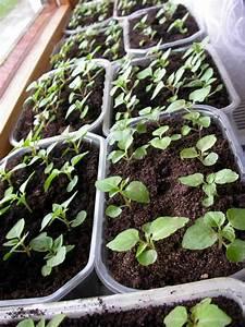 Blumen Für Fensterbank : blumen pflanzen ~ Markanthonyermac.com Haus und Dekorationen