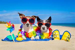Couple of dogs on vacation stock photo image 55327849 for Dog sitting vacation