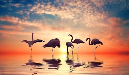 flamingo sunset birds animals background wallpapers