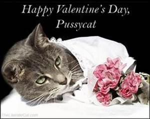 1000+ images about Valentines Day Cats on Pinterest ...