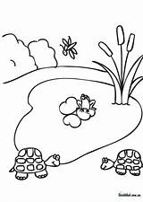 Coloring Pond Pages Drawing Printable Habitat Forest Clipart Template Clip Popular Drawings Sketch Paintingvalley Coloringhome sketch template