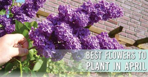 flowers to plant in april ready set plant best flowers to plant in april window genie blog