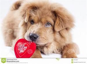 Cute Puppy Valentines Day Wallpaper Ialoveni Info