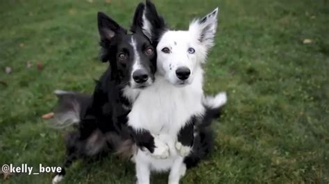 dogs posing  pictures youtube