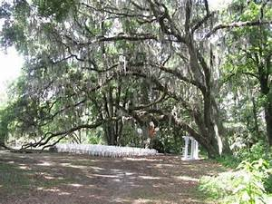 Here is the set up for that wedding picture of kanapaha for Gainesville botanical gardens