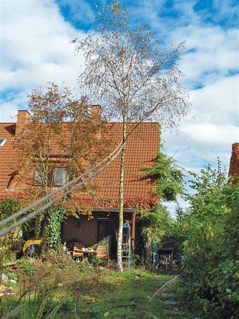 Baum Fällen  Gartentechnik Selbstde