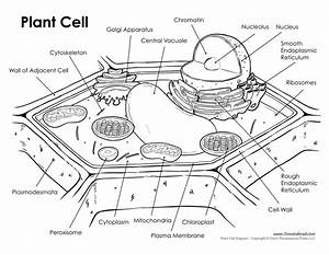Plant-cell-labeled