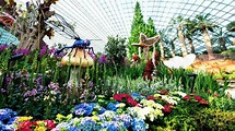 Flower Dome | Tropical Flowers | Gardens By The Bay