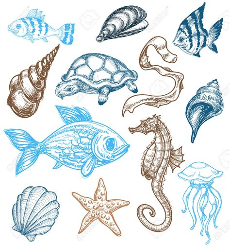 drawn sea life marine animal pencil   color drawn