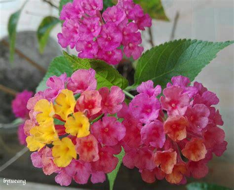 ดอกผกากรอง   ดอกไม้