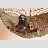 Sloth Goonies Gif | 620 x 413 jpeg 42kB