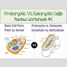 Prokaryotic & Eukaryotic Cell Worksheet By Amy Walker Tpt