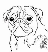 Coloring Pug sketch template