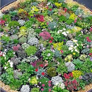 Steingarten Bilder Beispiele : ber ideen zu steingarten pflanzen auf pinterest g rtnern steingarten design und ~ Whattoseeinmadrid.com Haus und Dekorationen