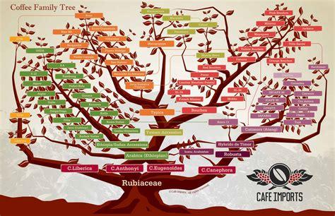 Robusta vs Arabica Coffee Beans   FreshGround Roasting