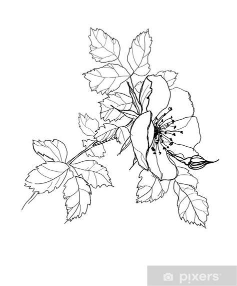 disegni a matita semplici disegni a matita semplici fiori
