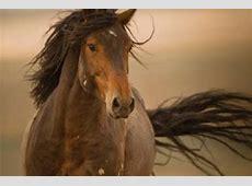 Horse Paintings Mateo wildlife horse giclee