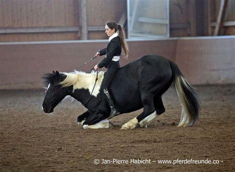 pferde weisheit theresa blum bodenarbeit tierpsychologie