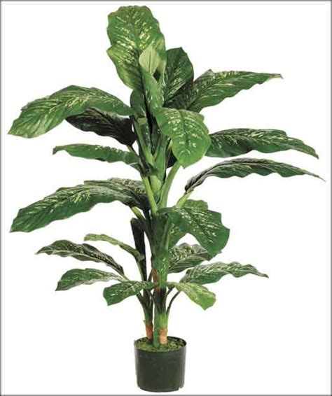 cheap indoor plants cheap indoor plants office furniture