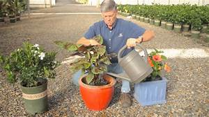 how to take care of outdoor potted plants over winter With how to take care of a garden