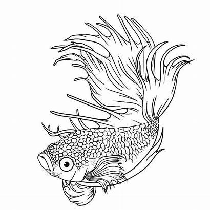 Ikan Gambar Cupang Hias Mewarnai Laga Dan