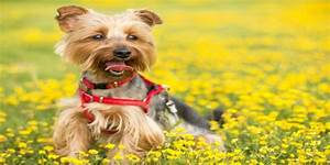 How To Put On A Dog Harness   Top Effective Tips And Ideas