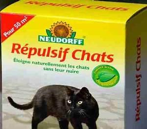 Repulsif Pour Chat Exterieur : r pulsif pour chat toutes les soultions possibles pour ~ Dailycaller-alerts.com Idées de Décoration