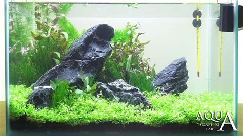 tutorial aquascape aquascaping lab tutorial iwagumi aquarium