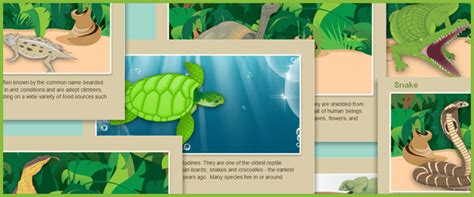 reptile fact cards  early years primary teaching