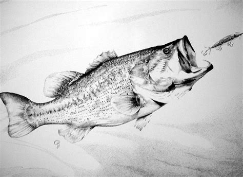 How To Draw A Bass Boat Step By Step by Best 25 Fish Drawings Ideas On Fish