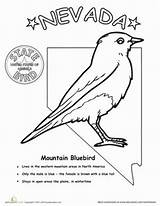 Nevada Bird State Coloring Birds Worksheet Pages Worksheets Grade Science Bluebird Facts Mountain Education Sheet sketch template