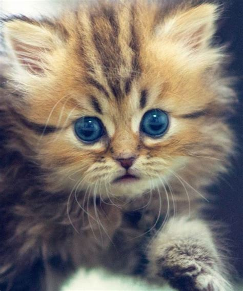 Funny Kitten Pictures (55 Wallpapers)  Adorable Wallpapers