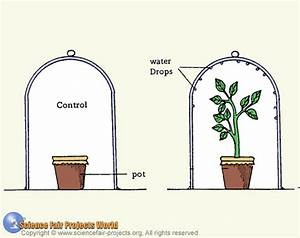 PLANT PHYSIOLOGY - BIOLOGY4ISC