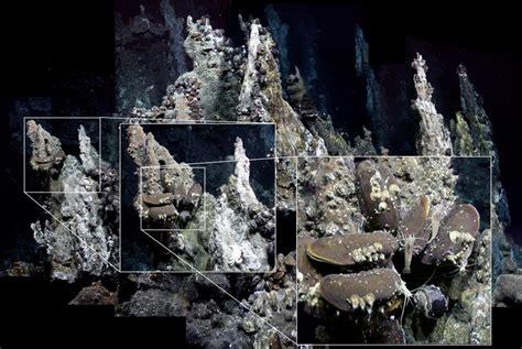 ecosystem dynamics  hydrothermal vent communities