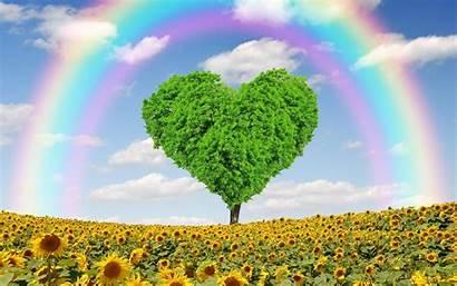 Environmental Wallpaperaccess Concepts Rainbow Wallpapers