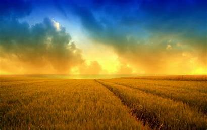 Harvest Field Wheat Golden Wallpapers Wallpapers13