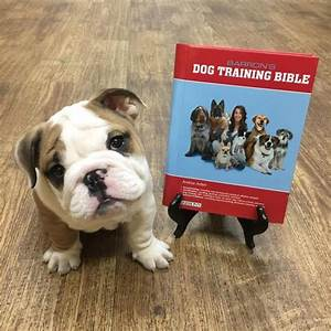 38 best images about dog training behavior with andrea With dog discipline classes