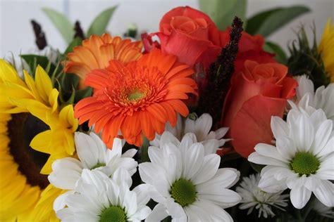 Images Gratuites Fleur Pétale Cadeau Flore Gerbera
