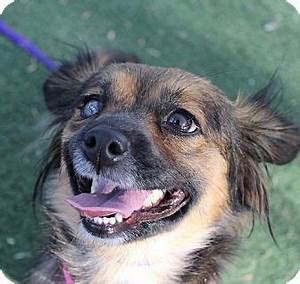 126 best dogs to adopt adoptapet petfinder petango images for Dog pound las vegas nevada
