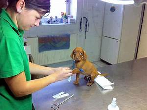 15+ Benefits Of Working At An Animal Hospital | Bored Panda