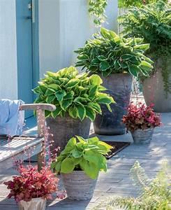 Blumen Für Schatten : pflanzplan vorgarten nordseite ~ Lizthompson.info Haus und Dekorationen