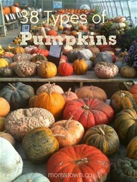 types of pumpkins 1000 ideas about pumpkin vine on pinterest pumpkin garden pumpkin plants and planting a garden