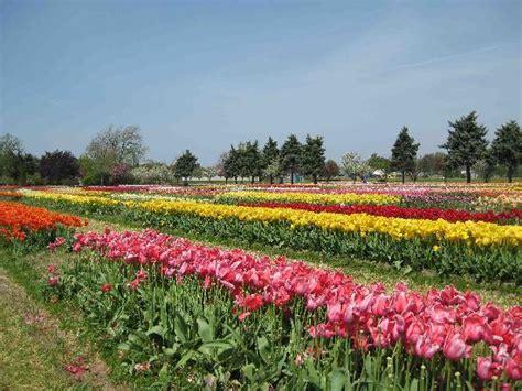 Veldheer Tulip Garden by 4 30 10 Picture Of Veldheer Tulip Garden