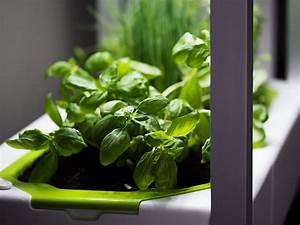 Dill Im Gewächshaus : das greenunit zimmergew chshaus mit einzigartiger led technologie green ~ Whattoseeinmadrid.com Haus und Dekorationen