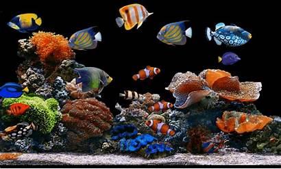 Aquarium Background Text Remove